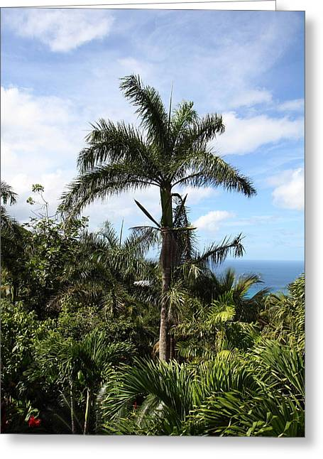 Caribbean Cruise - St Thomas - 1212211 Greeting Card by DC Photographer