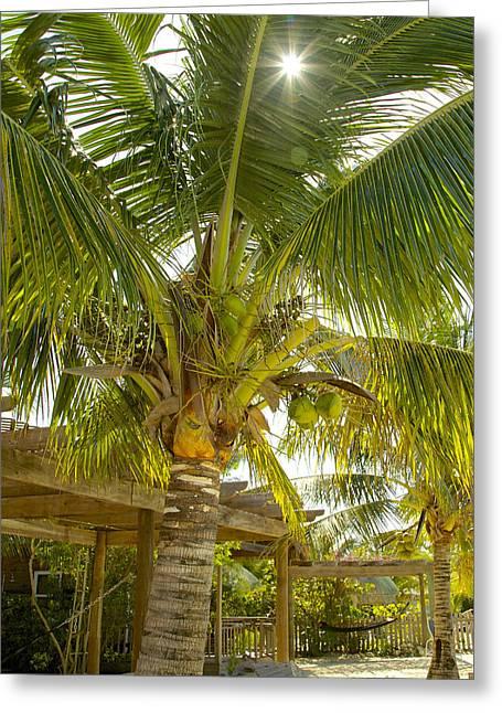 Caribbean Parasol Greeting Card