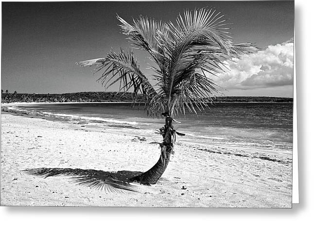 Caribbean, Puerto Rico, Vieques Greeting Card by Jaynes Gallery