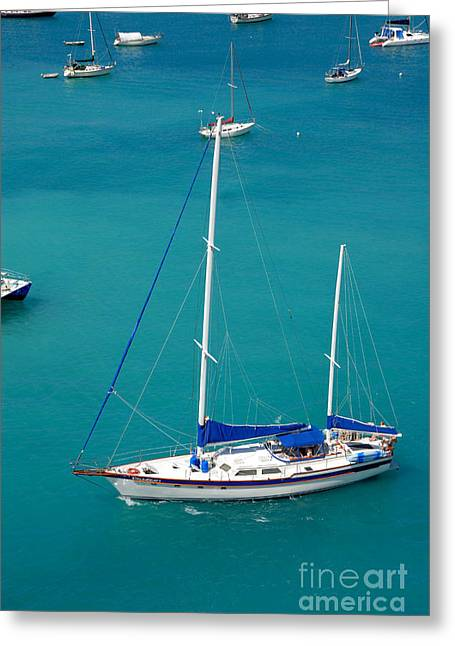 Caribbean Sailboat Greeting Card by Amy Cicconi