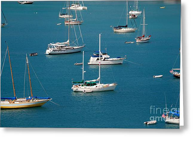 Caribbean Sailboats Greeting Card by Amy Cicconi
