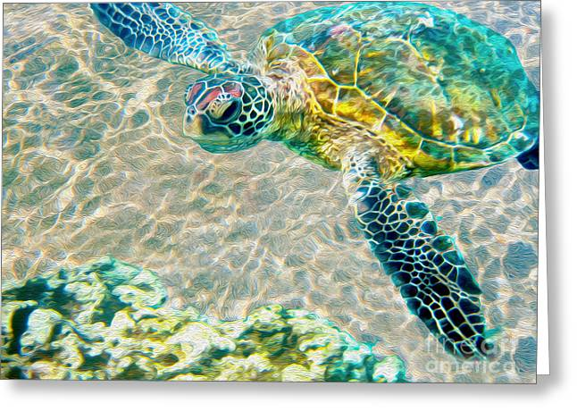Beautiful Sea Turtle Greeting Card by Jon Neidert