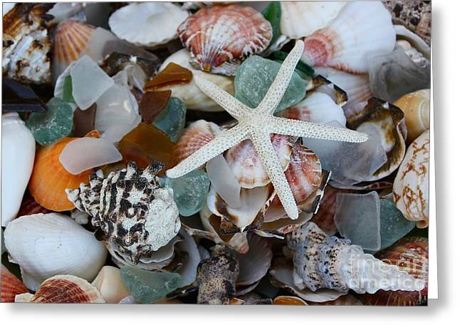 Caribbean Shells Greeting Card