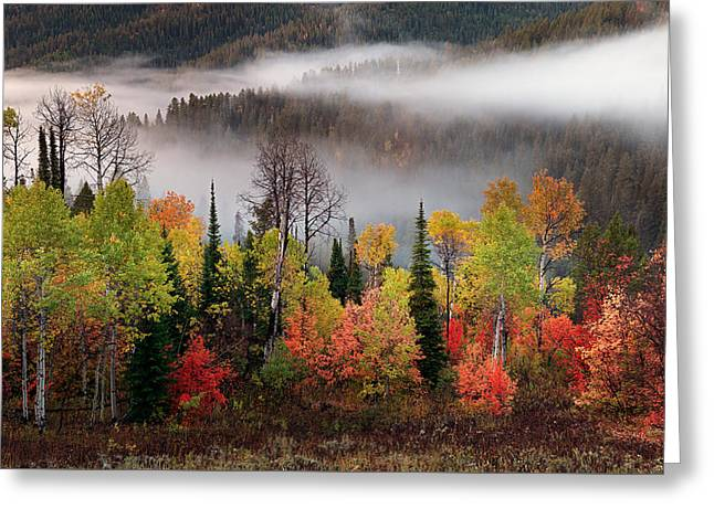 Caribou Canyon Greeting Card by Leland D Howard