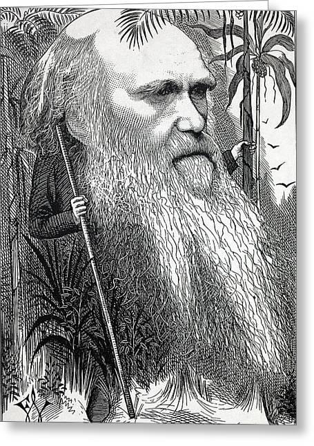 Caricature Of Charles Darwin Greeting Card by Paul D Stewart