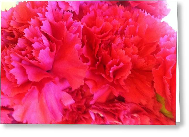 Greeting Card featuring the photograph Carnation  by Alohi Fujimoto