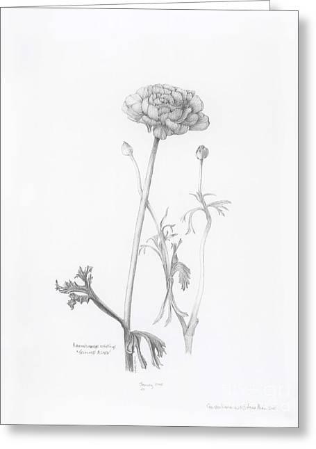 Carlsbad Ranunculus Greeting Card