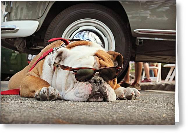 Carmel Cool Dog Greeting Card