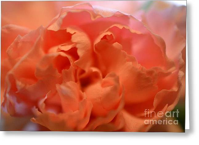 Greeting Card featuring the photograph Carnation Burst by Denise Tomasura