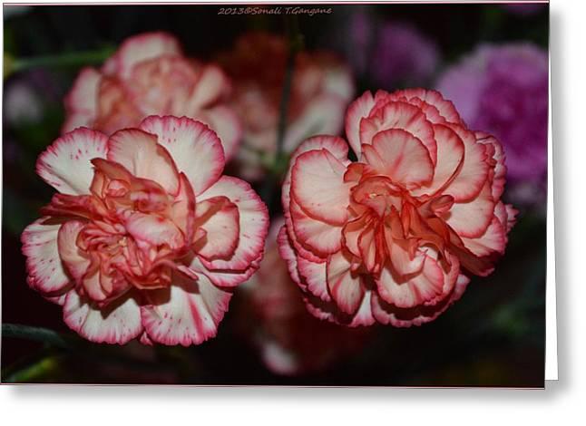 Carnation Magic Greeting Card by Sonali Gangane