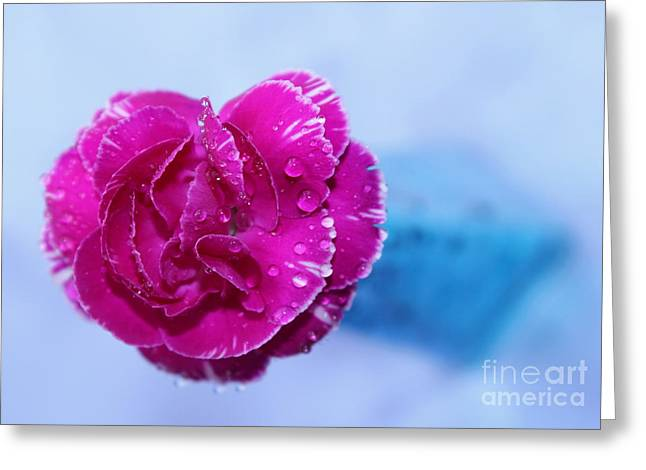 Carnation Of Love Greeting Card