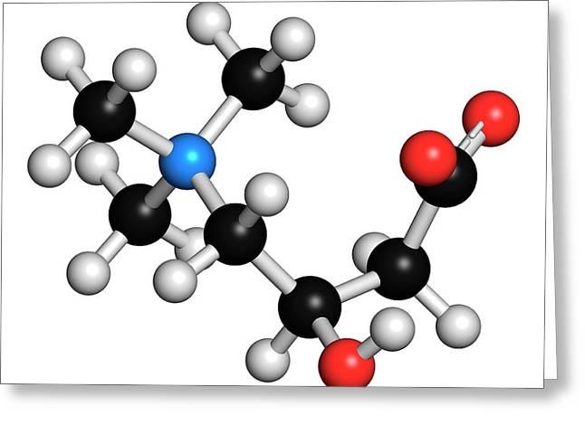 Carnitine Molecule Greeting Card by Molekuul