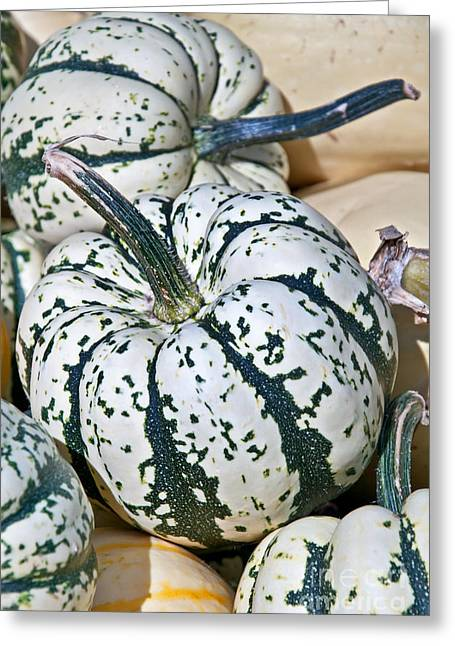 Carnival Squash Striped Green And White Greeting Card