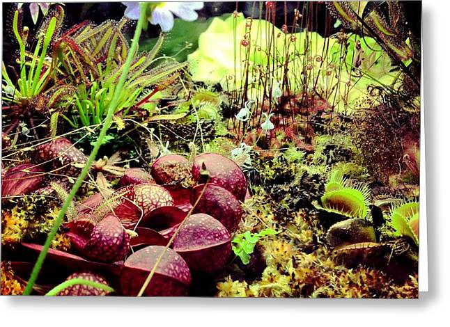Carniverous Plants Greeting Card