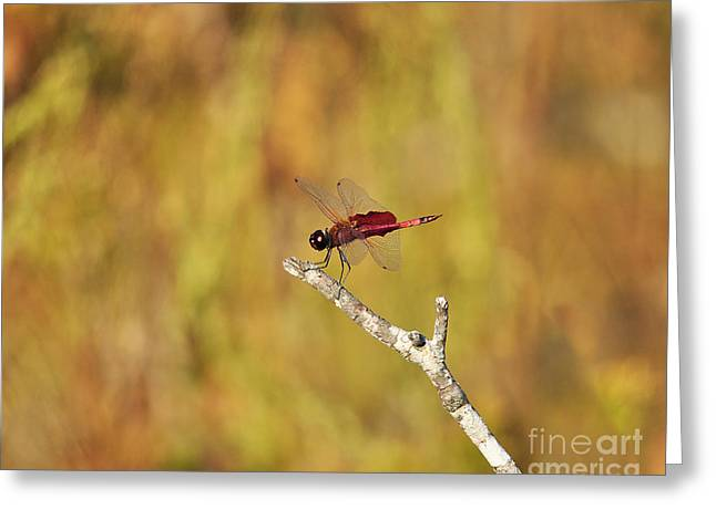 Carolina Saddlebags Dragonfly Greeting Card by Al Powell Photography USA