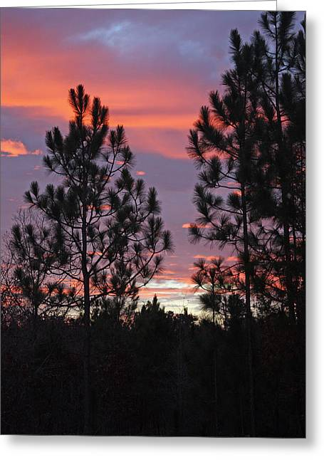 Carolina Sunset Greeting Card by Carolyn Stagger Cokley