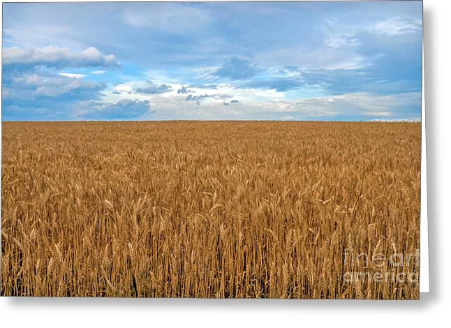Greeting Card featuring the photograph Carolina Wheat Field by Marion Johnson