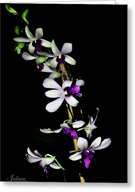 Carol's Orchid Greeting Card