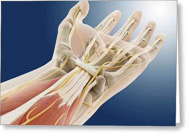 Carpal Tunnel Wrist Anatomy Greeting Card