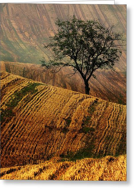 Carpet Fields Of Moravia Greeting Card by Jaroslaw Blaminsky