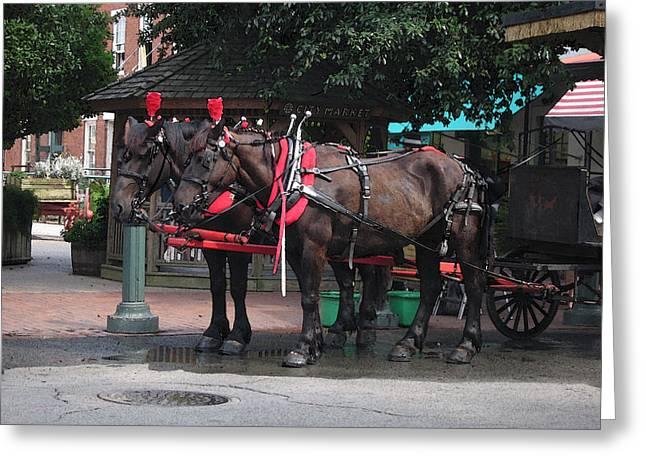 Carriage Horses At City Market Greeting Card by Linda Ryan