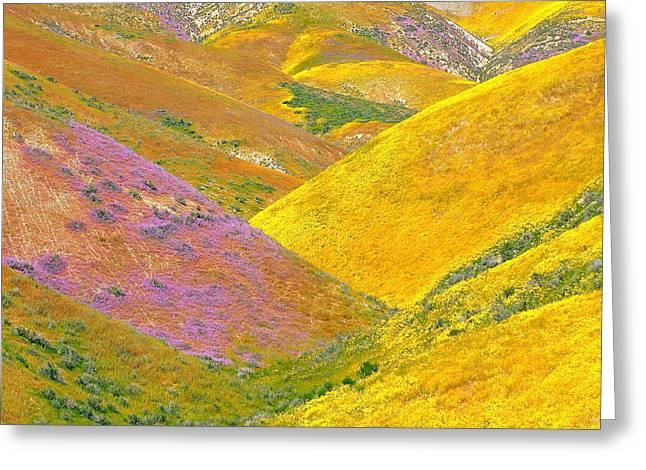 Carrizo Wildflowers Greeting Card