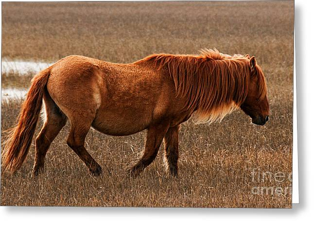 Carrot Island Pony Greeting Card