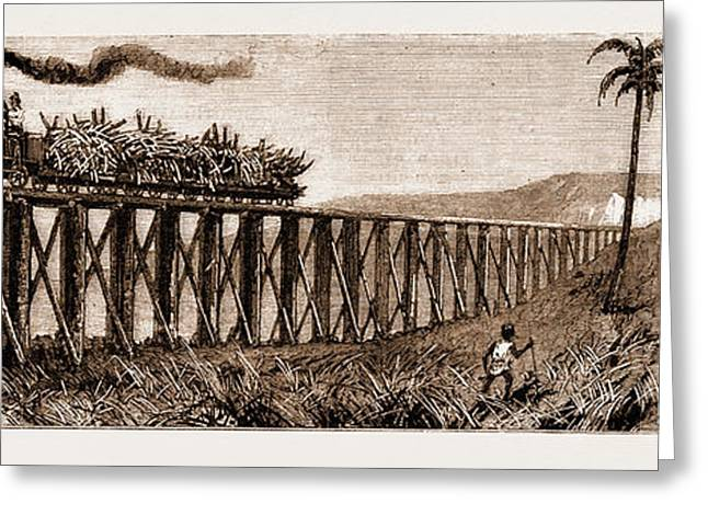 Carrying Sugar Cane On The Pioneer Plantation Greeting Card by Litz Collection