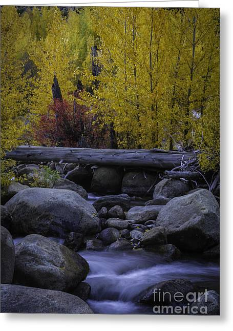 Carson River Autumn Greeting Card by Mitch Shindelbower