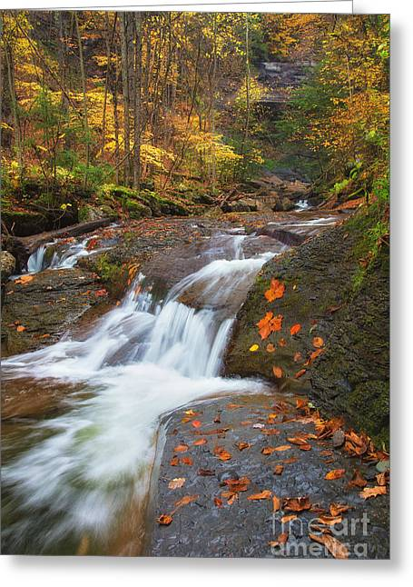Cascade In The Glen Greeting Card by Michele Steffey