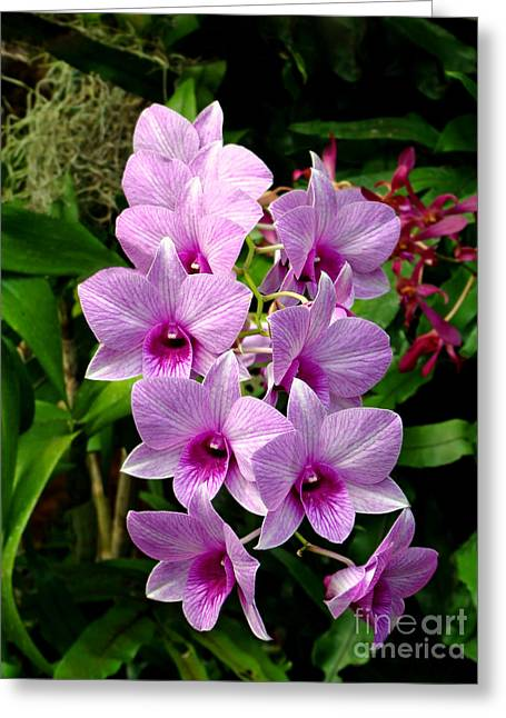 Cascading Lilac Orchids Greeting Card by Sue Melvin