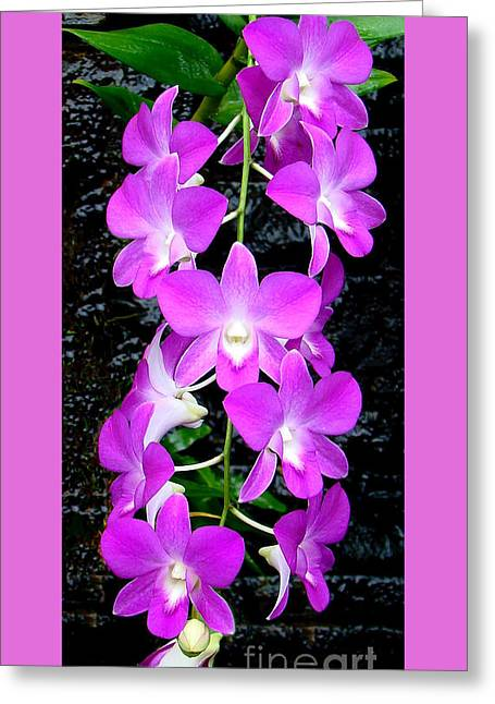 Cascading Orchids Greeting Card by Sue Melvin