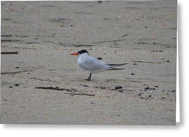 Greeting Card featuring the photograph Caspian Tern by James Petersen
