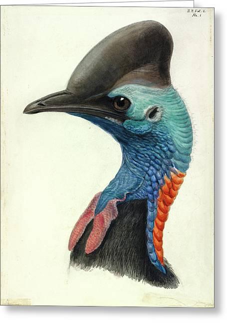 Cassowary Head Greeting Card