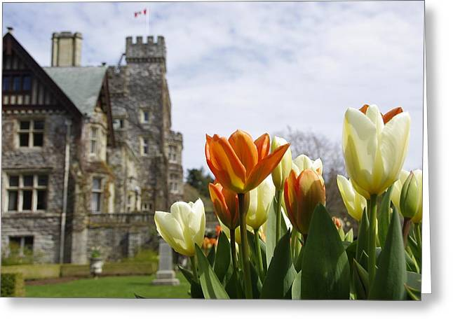 Castle Tulips Greeting Card