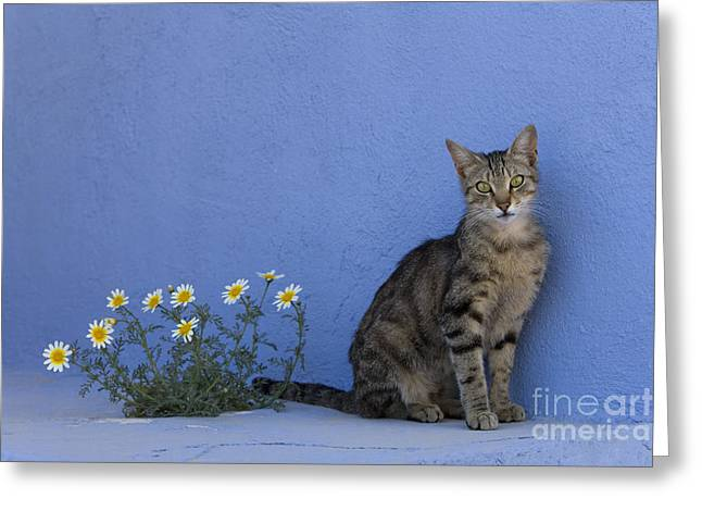 Cat And Flowers In Greece Greeting Card