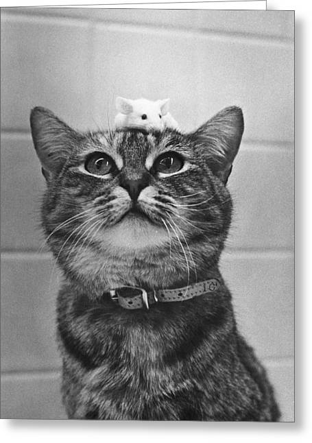Cat And Mouse Greeting Card by Robert Houston