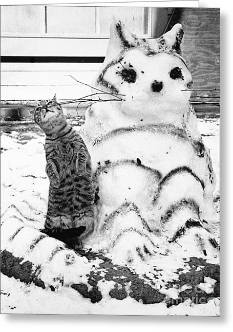 Cat And Snowcat Greeting Card by Jack Rosen