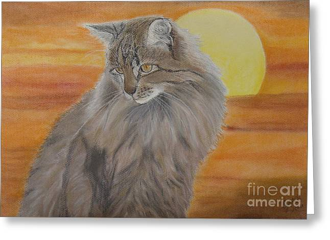 Cat And Sunset  Greeting Card by Cybele Chaves