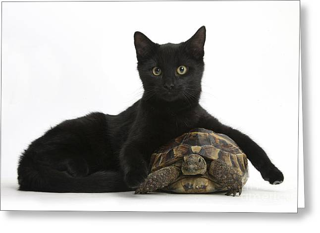 Cat And Tortoise Greeting Card