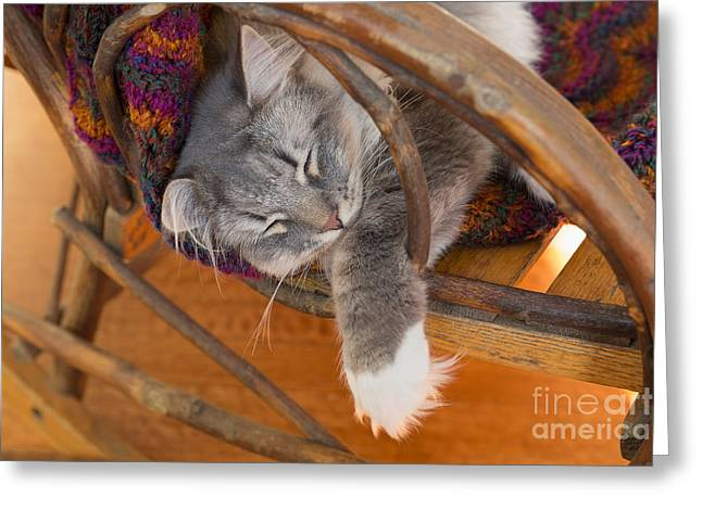 Cat Asleep In A Wooden Rocking Chair Greeting Card