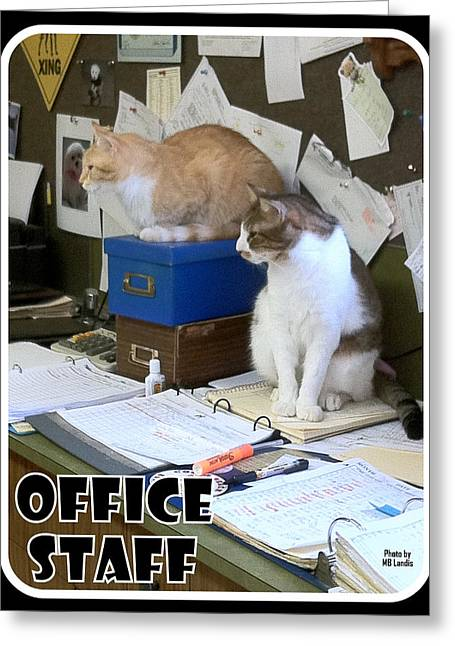 Greeting Card featuring the photograph Cat Business by Mary Beth Landis
