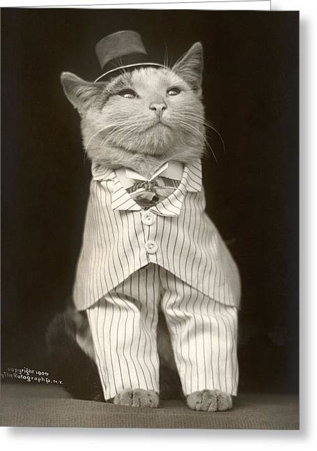 Cat, C1906 Greeting Card by Granger