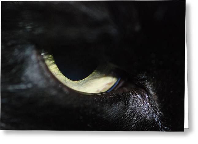 Cat Eye Greeting Card