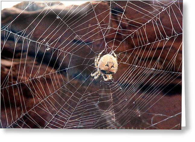 Greeting Card featuring the photograph Cat Faced Spider by Tarey Potter