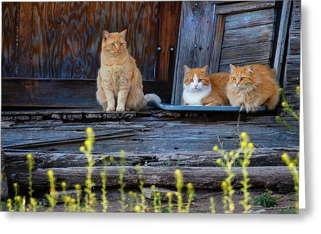 Cat (felis Catus Greeting Card