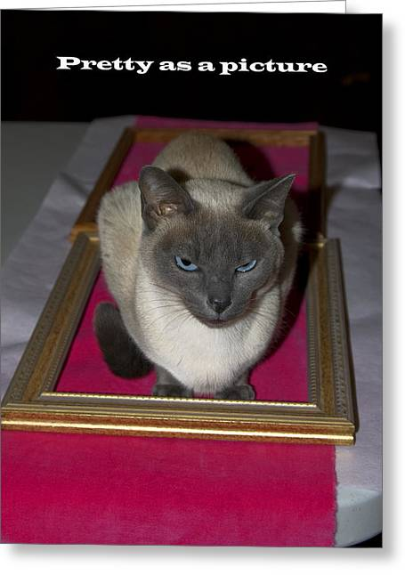 Cat Framed Greeting Card by Sally Weigand