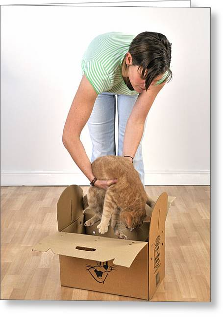 Cat Going In Box Greeting Card