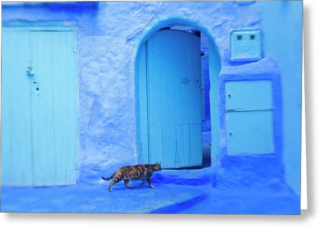 Cat In Doorway, Chefchaouen, Morocco Greeting Card by Peter Adams