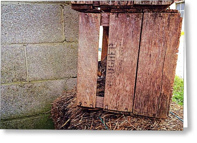 Cat In Hiding Greeting Card